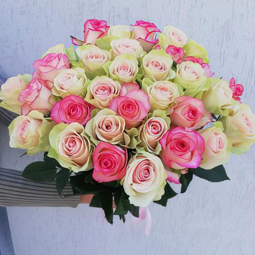 біла і рожева троянда фото