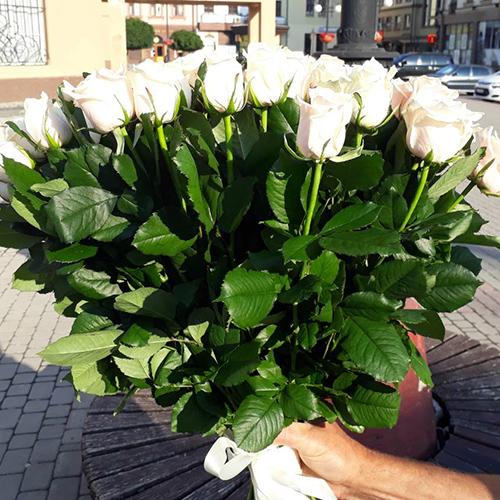 33 троянди фото