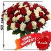 Фото товара 101 троянда мікс червона і біла (50 см) во Львове