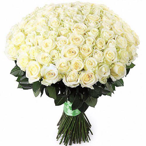 Фото товара 101 біла троянда во Львове