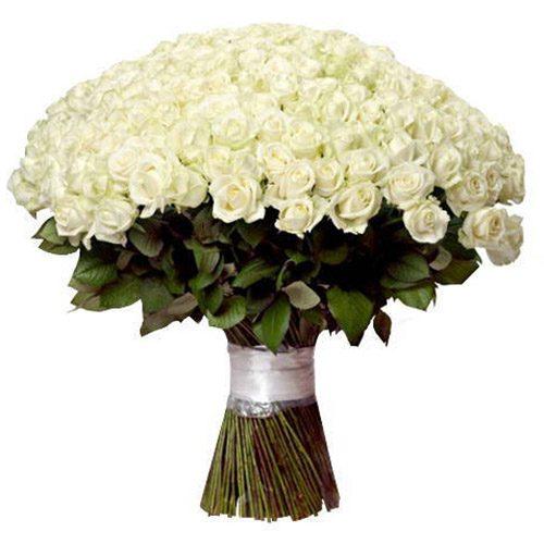 Фото товара 201 біла троянда во Львове