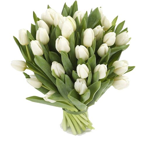Фото товара 25 білих тюльпанів во Львове