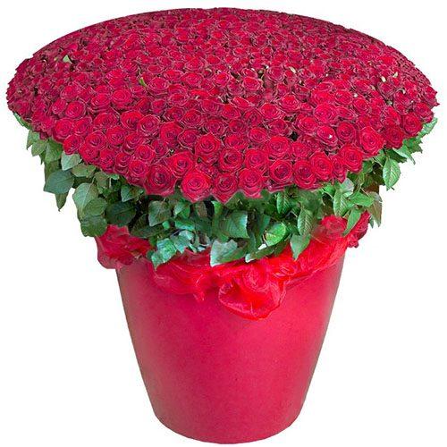 Фото товара 301 червона троянда у великому вазоні во Львове