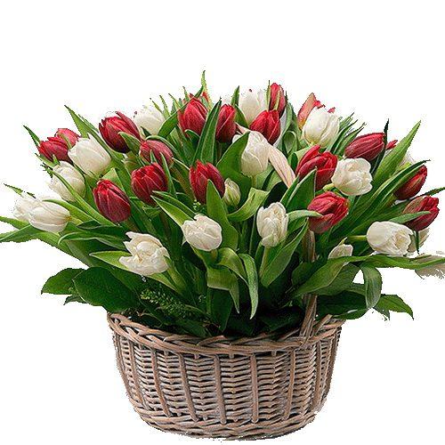 Фото товара 51 тюльпан у кошику во Львове