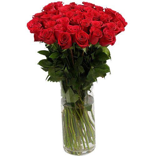 Фото товара Троянда імпортна червона (поштучно) во Львове